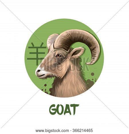 Goat Chinese Horoscope Character Isolated On White Background. Symbol Of New Year 2027. Animal Ram O