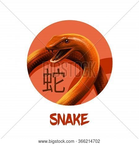 Snake Chinese Horoscope Character Isolated On White Background. Symbol Of New Year 2025. Reptile Ani