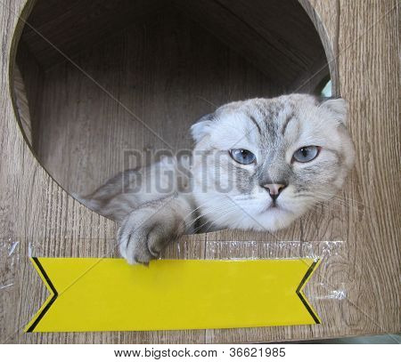 Cat With Sign