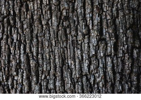Gray Tree Crust Texture Symmetric Old With Copy Space