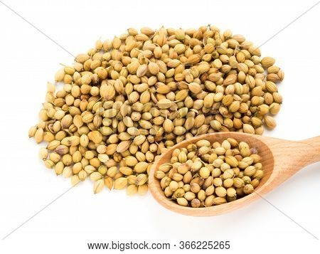 Spice Coriander (coriandrum Sativum) Bunch And Spoon On White. Diet And Weight Loss Concept