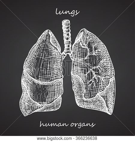Lungs. Realistic Hand-drawn Icon Of Human Internal Organs On Chalkboard. Engraving Art. Sketch Style