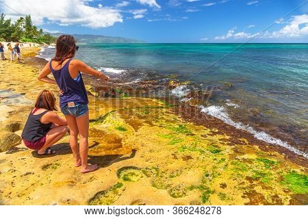 Oahu Island, Hawaii, United States - August 26, 2016: Tourist Women Looking At The Green Sea Turtles