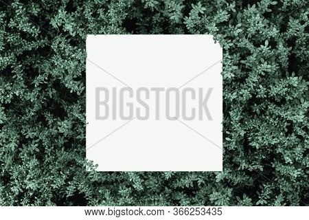 Mock Up Paper White Card On A Green Leaves Background Of The Tropical Plants Design For Greeting Car