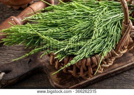 Fresh Horsetail Twigs In A Wicker Basket