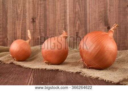 Onion. Three Heads Of Onion. Bitter Onion. Onions From The Bed.