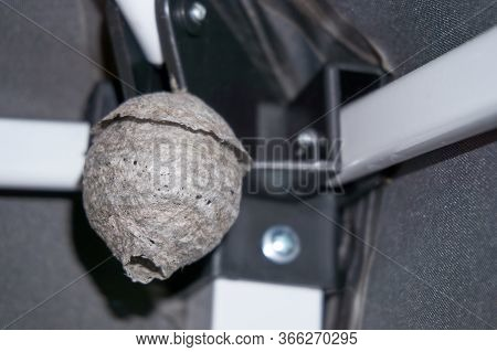 Large Wasp Hornet Nest Under Eaves Of A Home