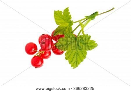 Currant. Branch Of Red Currant Fruits With Leaf Isolated On White Background. Isolated Berries.