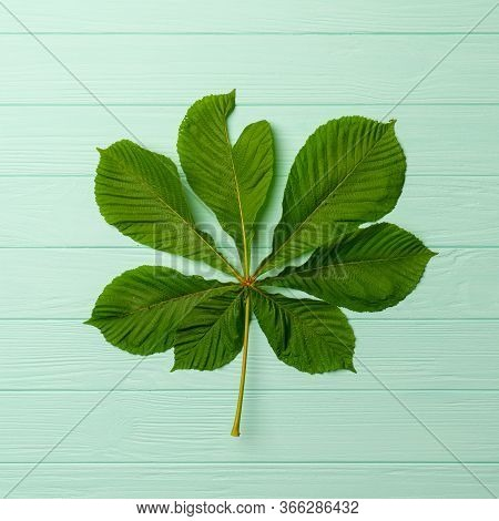 Big Green Chestnut Leaf Isolated On Turquoise Background