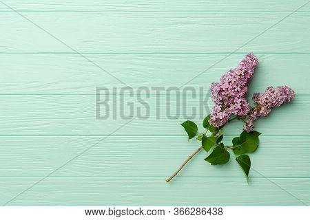 Lilac Bush Branch With Blooming Inflorescences. Deep Purple Lilac Branch On Turquoise Background