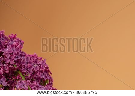 Lilac Purple, Violet Flowers On The Left Down Corner And Beige Background