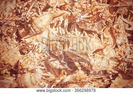 Seashells Background. Background From Exotic Shells. Sea Mollusks Close-up. Top View Close Up Of Mol