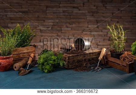 Still Life Of Spring Hobby Garden With Herbs And Gardening Utensils