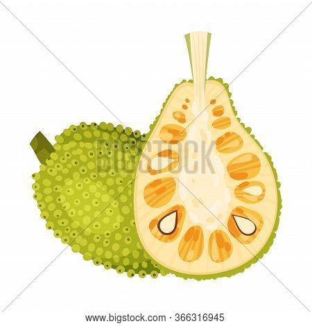 Halved Elliptical Jackfruit With Green Seed Coat And Fibrous Core Vector Illustration