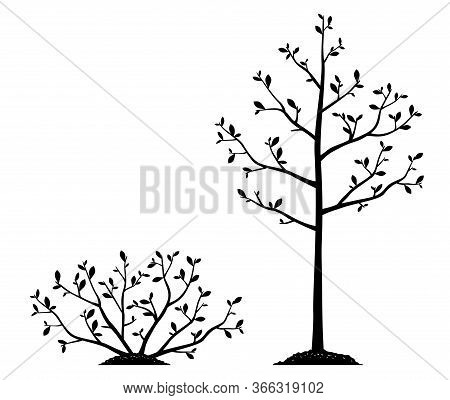 Group Of Young Slender Bush Plant And Tree Silhouettes With Small Leaves And Thin Branches Growing I