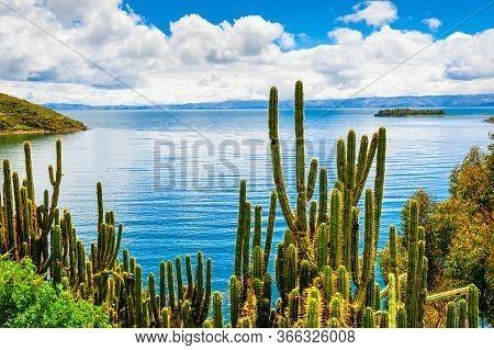 Wild Green Cactuses On Island Of Sun (isla Del Sol) On Titicaca Lake, Bolivia. Beautiful Summer Land