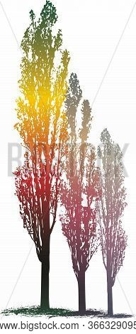 Vector Drawing Of Poplar Trees In Magic Color