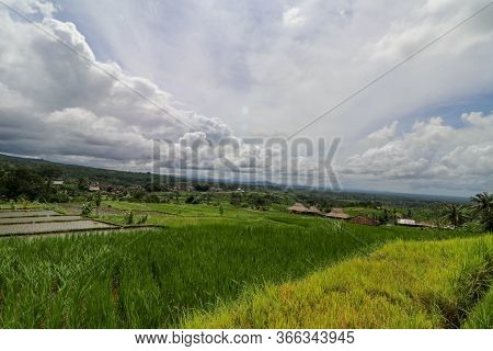 Jatiluwih Rice Terraces. The Beautiful Rice Fields In Bali Have