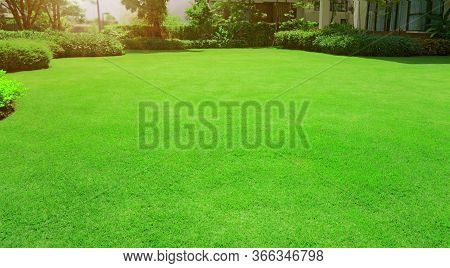 Fresh Green Manila Grass Smooth Lawn With Curve Form Of Bush, Trees On The Background In The House's