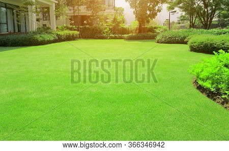 Fresh Gardening Green Burmuda Grass Smooth Lawn With Curve Form Of Bush, Trees On The Background In