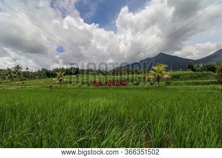 Jatiluwih And The Landscape Of Mount Batukaru Bali. Rice Field A