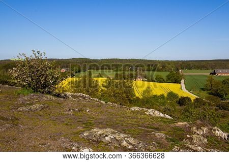 Southern Sweden (scania) Farmland With Yellow Canola Field Seen From A High Point At Nature Protecte