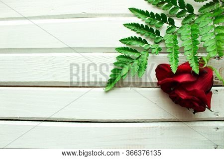 Solitary Red Rose And Greenery On Isolated White Background.