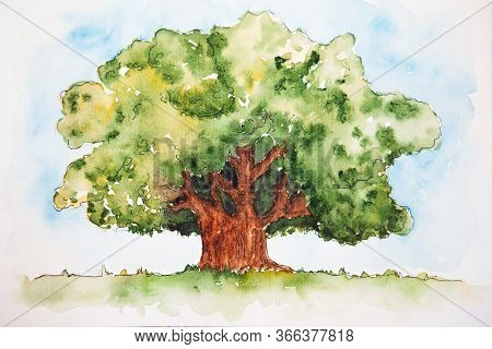 Watercolor Drawing Of Broad-leaved Green Tree Isolated On The White Background. Illustration Of Big