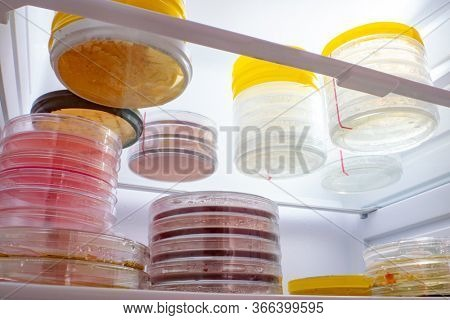 Petri dishes with samples of microorganisms in a laboratory refrigerator