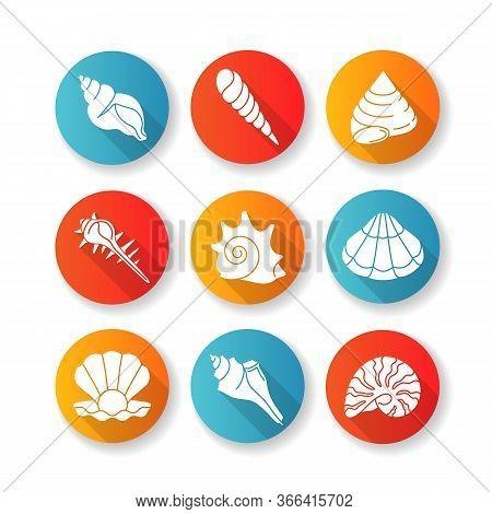 Sea Shells Flat Design Long Shadow Glyph Icons Set. Various Molluscan Shells, Conchology Aquatic Sou