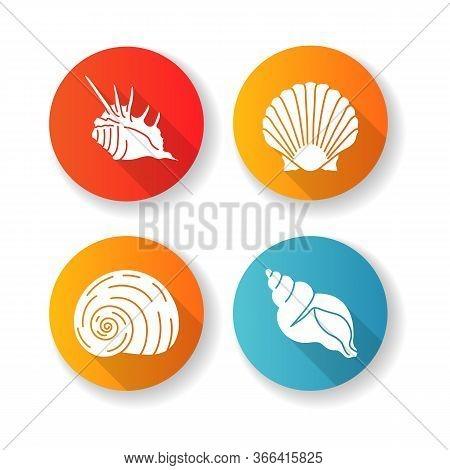 Exotic Sea Shells Flat Design Long Shadow Glyph Icons Set. Molluscan Cockshells, Conchology Sea Scal