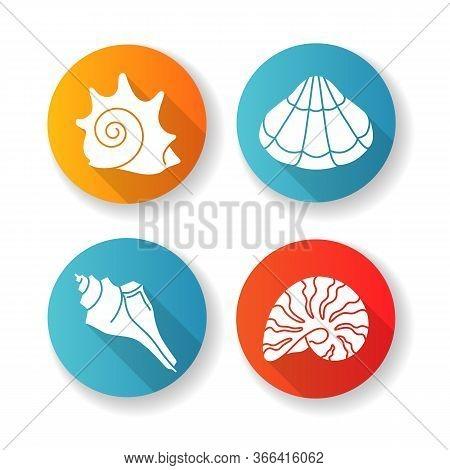 Various Seashells Flat Design Long Shadow Glyph Icons Set. Sea Shells Collection Hobby, Conchology R