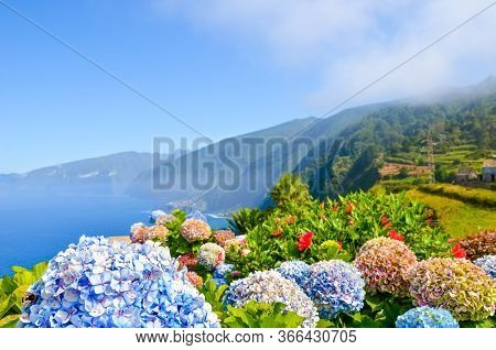Colorful Flowers And Beautiful Northern Coast Of Madeira Island, Portugal. Typical Hydrangea, Horten