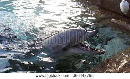 Dolphin Smile In Water. Dolphin In Water. Dolphin Head. Dolphin Smiling