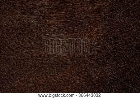 Background Of Red Cow Skin. Red Cowhide Rug.