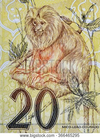 Golden Lion Tamarin A Portrait From Old Brazilian Money