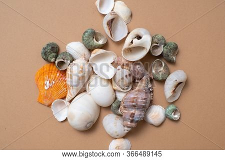 Different Seashells On A Ochre Color Background , The Concept Of Holidays By The Sea. Background Wit