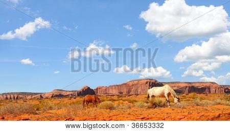 Horses grazing the desert vegetation of Monument Valley poster