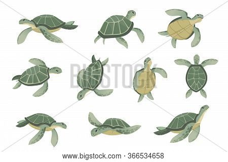 Set Of Big Green Sea Turtle Cartoon Cute Animal Design Ocean Tortoise Swimming In Water Flat Vector