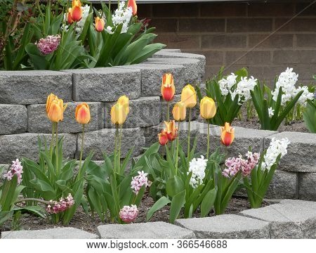 Many Colorful Flowers On The Flower Bed