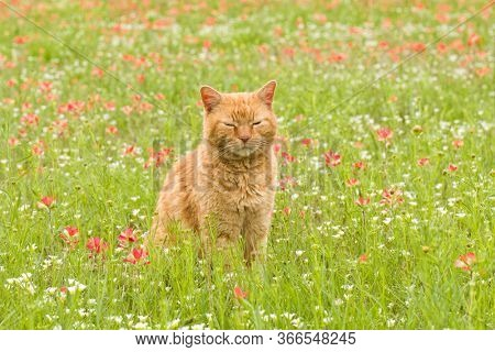 Orange tabby cat sitting in the middle of wildflowers with his eyes closed, relaxed and happy