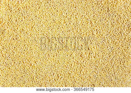 Yellow Millet Grits As Texture With Copy Space. Yellow Background