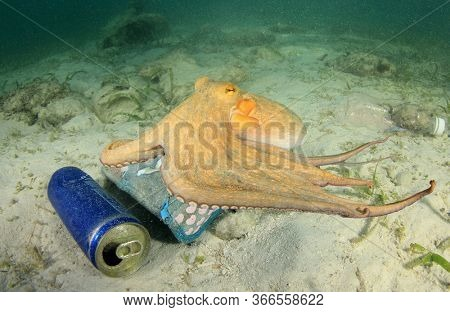 Polluted ocean. Octopus looks for food among plastic garbage and tin cans