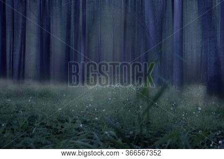 Deciduous Forest At Night Shrouded In Fog And Twilight.