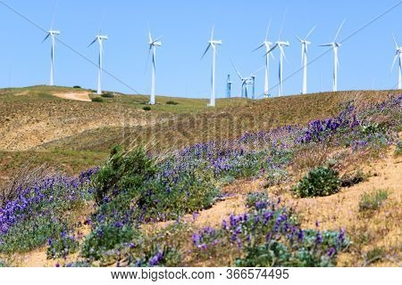 Lush Grasslands With Lupine Wildflowers During Spring Including Modern Wind Turbines Creating Altern