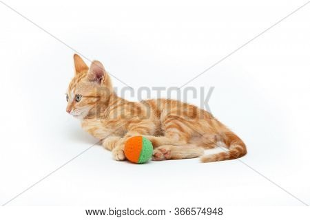 Red striped kitten plays with ball, isolated on white background. Adorable tabby baby cat. Animal. Cute young pet.