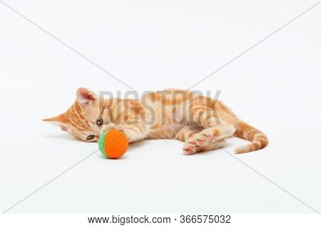 Red striped kitten plays with toy ball, isolated on white background. Adorable tabby baby cat. Animal. Cute young pet.