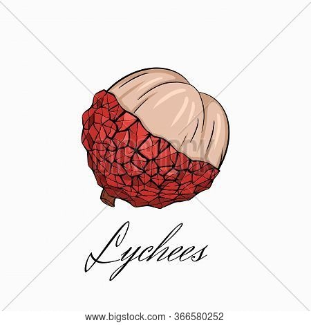 Color Sketch Lychee Tropical Fruit Illustration With Calligraphy Inscription A White Background. Hal