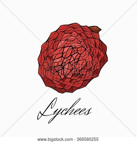 Color Sketch Lychee Tropical Fruit Illustration With Calligraphy Inscription A White Background. Who