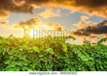 Autumn Vineyards At Sunset. Spain, Rioja. Tourism And Winemaking In Spain